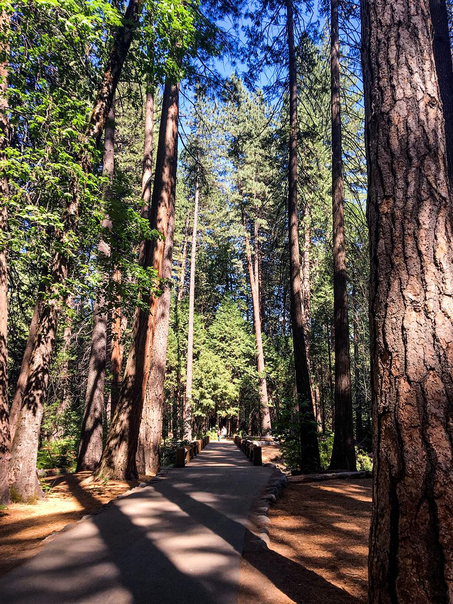General-Sherman-Tree-Trail