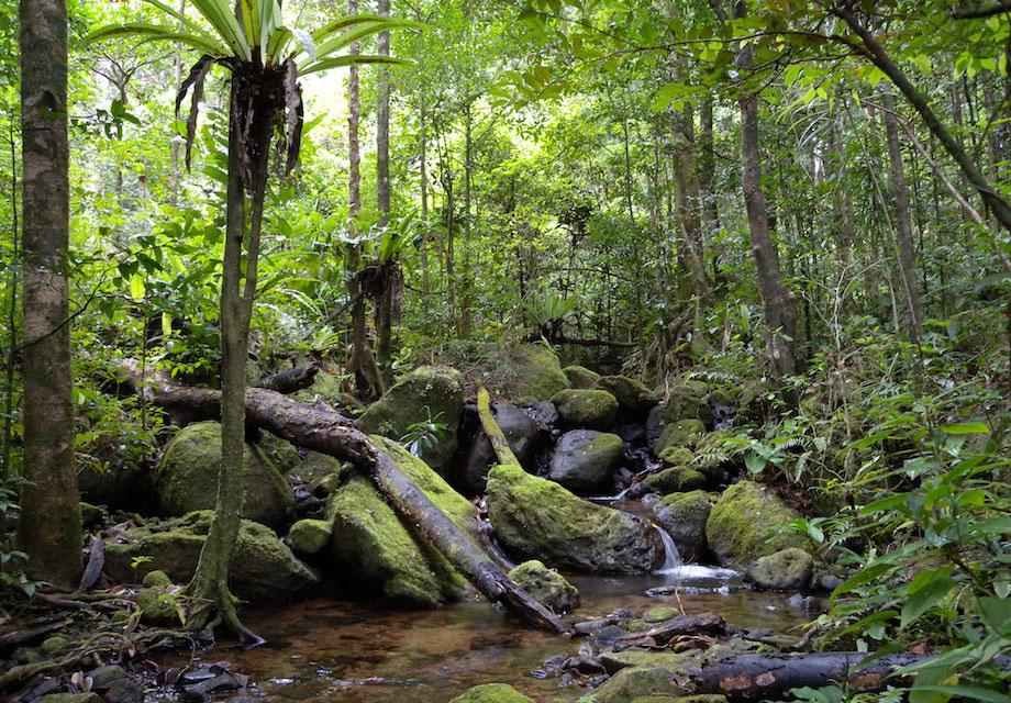 foret-tropicale-madagascar